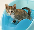 Richell Cat Potty Blue